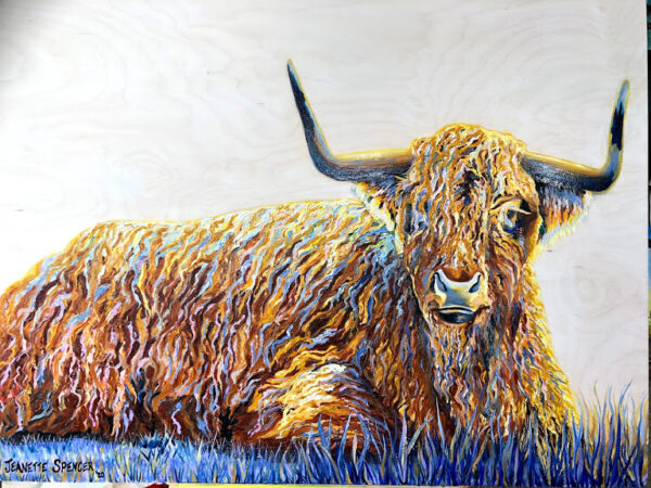 Highland Cow relaxing